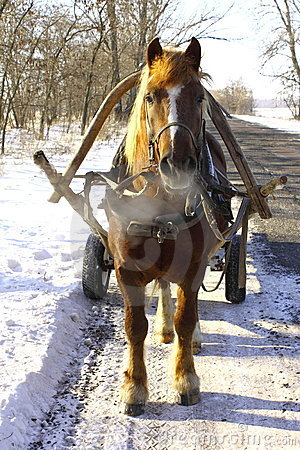 Beautiful horse on winter road