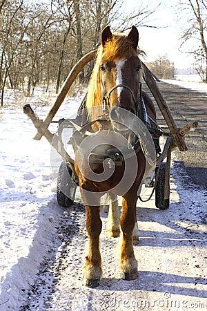 Beautiful horse on winter road