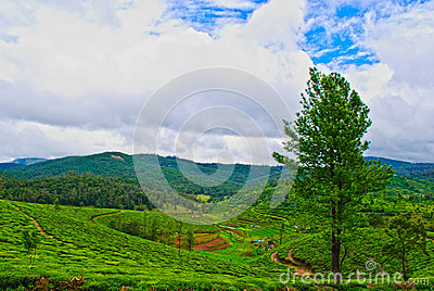 Beautiful Indian Tea Estates