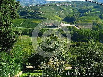 Beautiful italian vineyards