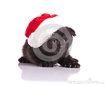 Beautiful kitten celebraiting christmas