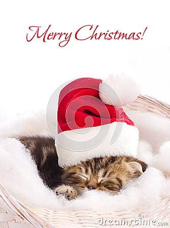 Beautiful kitten in santa claus cap