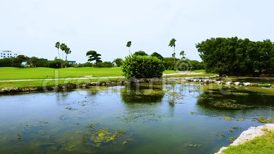 Beautiful landscape. Aruba island nature. Cute birds in water with green  trees on background.