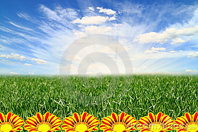 Beautiful landscape with flowers Gazania