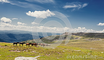 Beautiful landscape with horse and  blue sky.