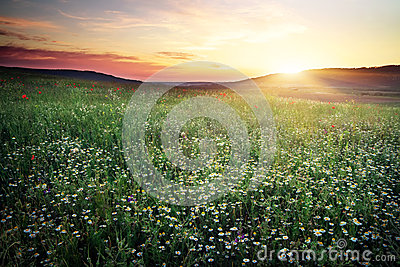 Beautiful landscape with sunset sky and field.