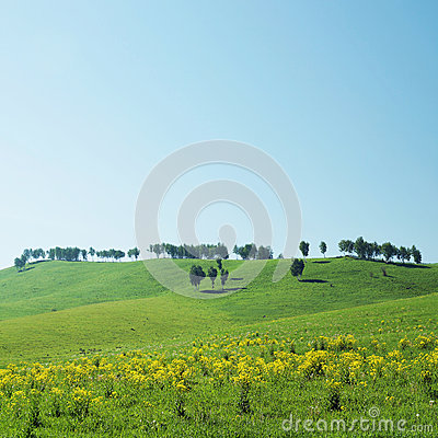 Beautiful landscape with trees on hills in sunny day