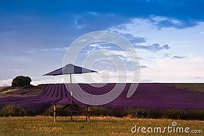 Beautiful lavender field landscape
