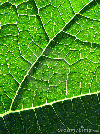 Beautiful leaf texture
