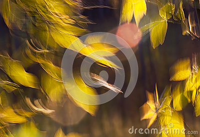 Beautiful leaves in the wind