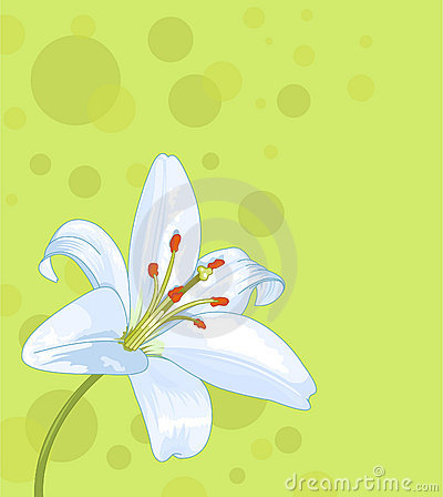 Beautiful lily seamless card