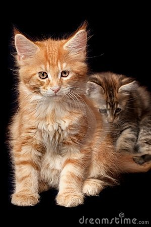 Beautiful little kittens