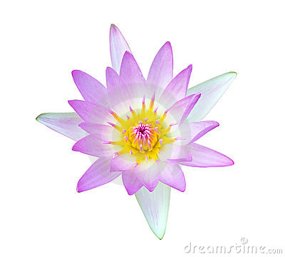Beautiful lotus flower on white