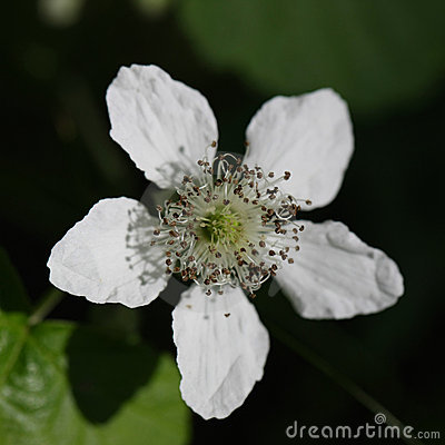 Beautiful macro shot wild white flower outdoors