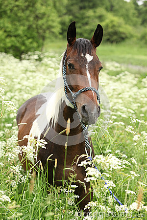 Beautiful mare with rope halter