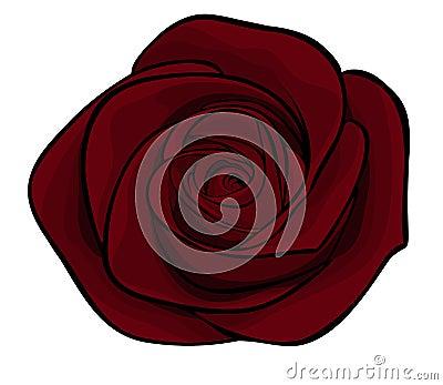 Beautiful maroon roses alone