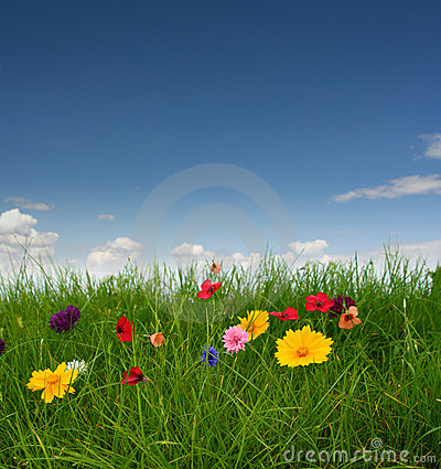 Free Beautiful Meadow With Flowers Royalty Free Stock Photography - 5989637