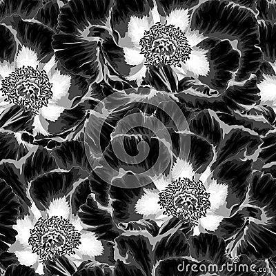 Free Beautiful Monochrome, Black And White Seamless Background With Flowers Plant Paeonia Arborea (Tree Peony) Royalty Free Stock Photos - 71949338