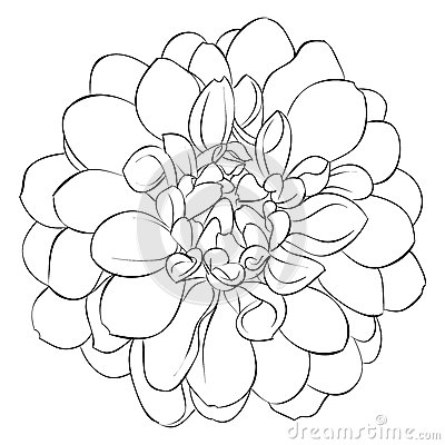 Marigold Flower Coloring Coloring Pencil Coloring Pages