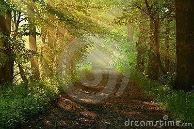 Beautiful morning-road of forest