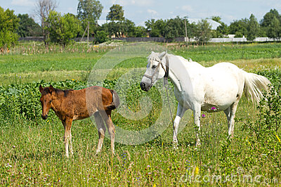 Beautiful mother and baby horse