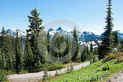 Beautiful mountain landscape, Rainier National Park