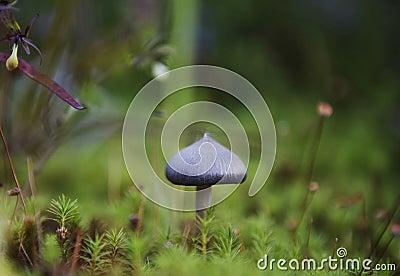 Beautiful mushroom