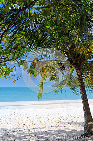 Green tree on a white sand beach