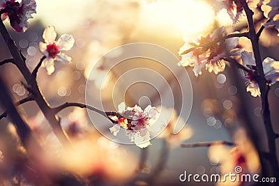 Beautiful nature scene with blooming tree Stock Photo