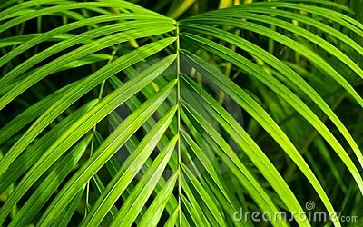 Beautiful Neanthe Bella Palm