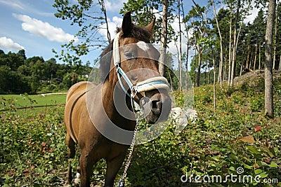 Beautiful new forest pony portrait