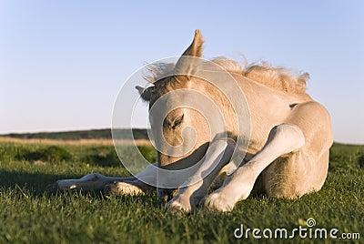 Beautiful newborn foal