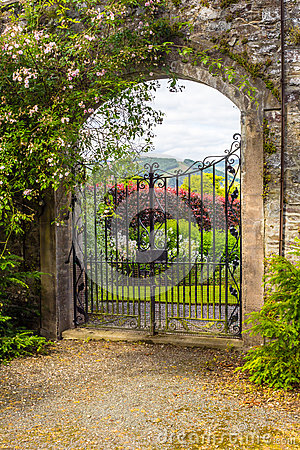 Free Beautiful Old Garden Gate Covered With Green Ivy Royalty Free Stock Photo - 66736695