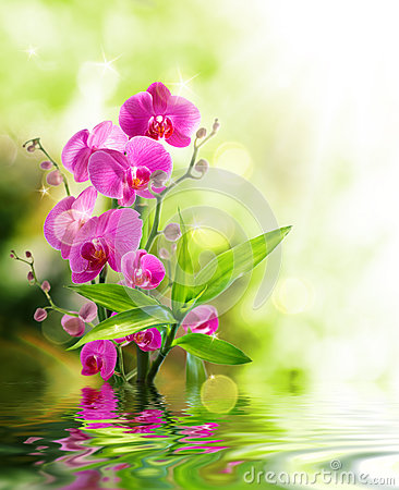 Free Beautiful Orchid And Bamboo For Border Treatment Spa On Water Royalty Free Stock Photos - 35460998