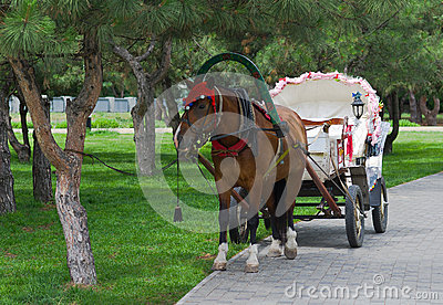 Beautiful pair - horse and cart