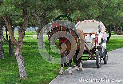 Beautiful pair - horse and cart