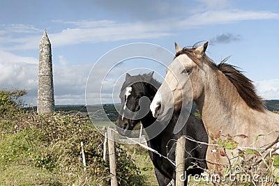 Beautiful pair of Irish horses