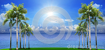 Beautiful palm tree on green field with blue sea water backgroun