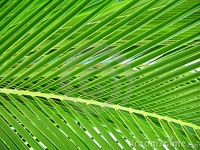 Beautiful Palm Tree Leaf