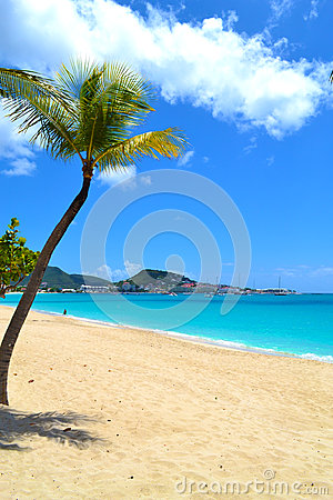 Beautiful Palm Tree on the Shore of a Caribbean Island Beach
