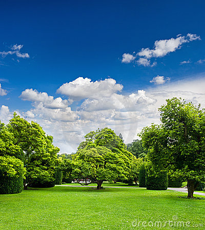 Beautiful park trees over blue sky