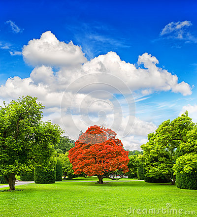 Beautiful park trees over dramatic blue sky