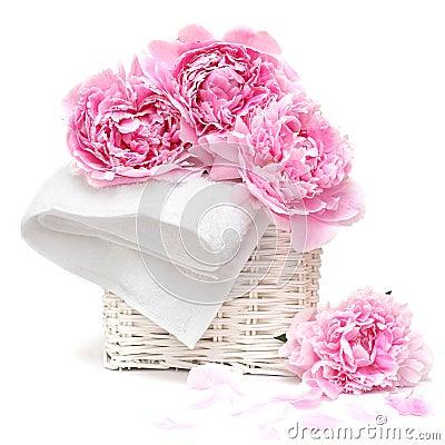 Beautiful pastel pink flower