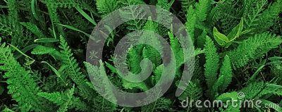 Beautiful pattern for banner with a green plant. Stock Photo
