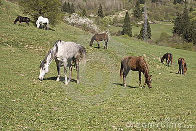 Beautiful Pedigree Horses On Hill Royalty Free Stock Photo - Image: 9157675