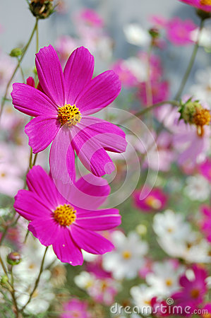 Beautiful pink bell flowers