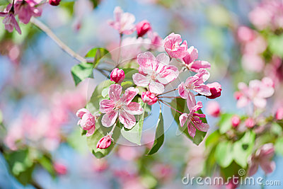 Beautiful pink blooming.