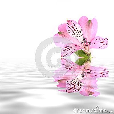 Free Beautiful Pink Flower Stock Photos - 14218343
