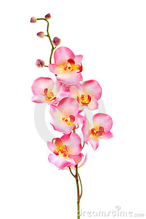 Free Beautiful Pink Orchid Isolated On White Royalty Free Stock Image - 1925966