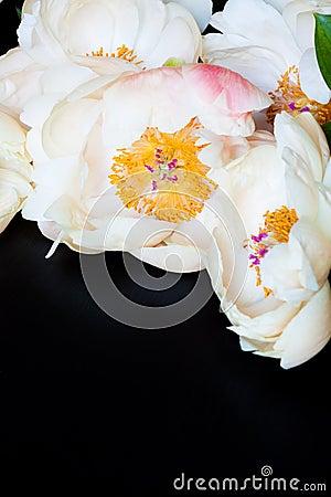 Free Beautiful Pink Peonies. Royalty Free Stock Photos - 122801548